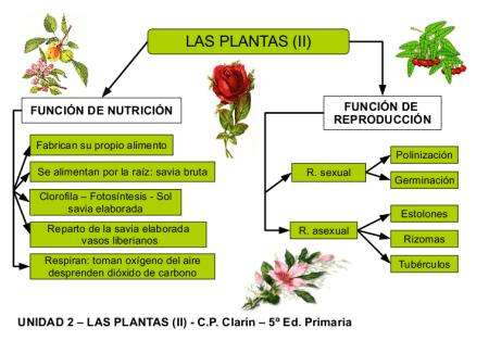 Funciones vitales en las plantas for Que son plantas ornamentales ejemplos