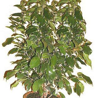 Plantas peligrosas para tu salud