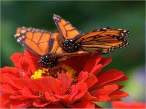 Un jardín de mariposas