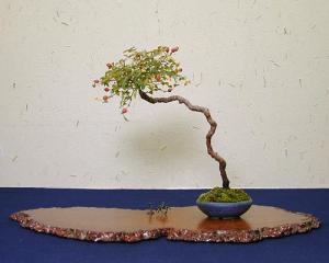 Estilos de bonsáis 8