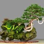 Estilos de bonsáis 1