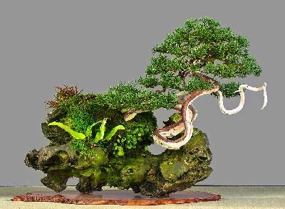 Estilos de bonsáis