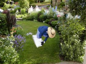 Cuidados mínimos en el jardín
