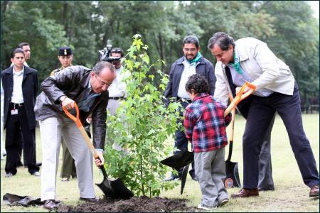 Consejos para plantar árboles