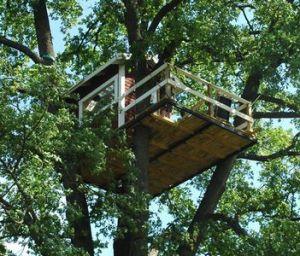 Casas en los árboles 6