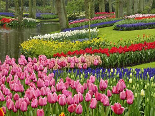 Jardín Keukenhof Spring Gardens
