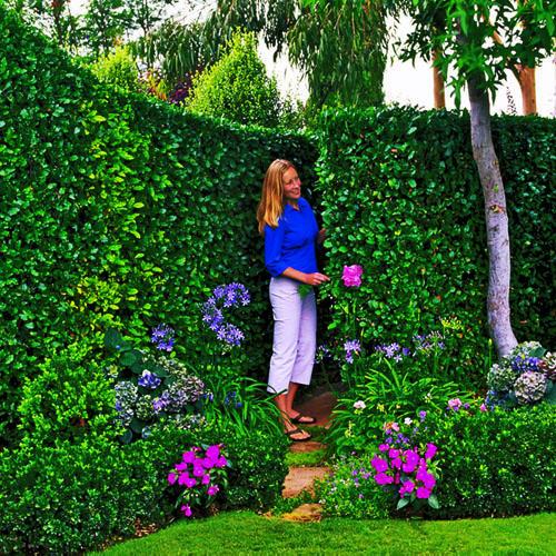 Como tener tu jard n impecable por poco dinero - Como hacer un jardin bonito ...