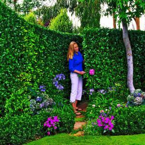 Como tener tu jardín impecable por poco dinero