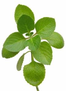 Cultiva plantas aromáticas