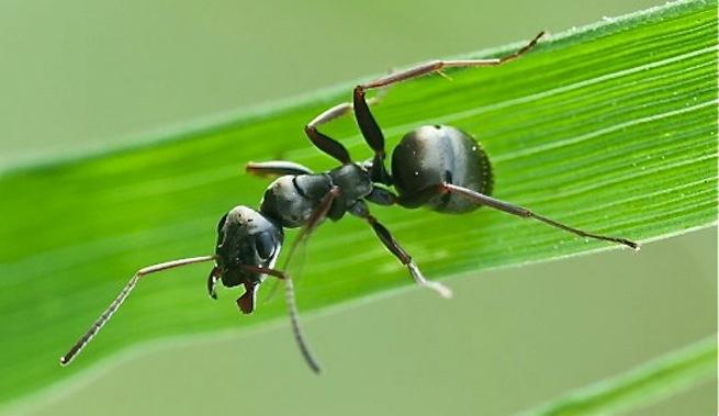 Di adiós a las hormigas
