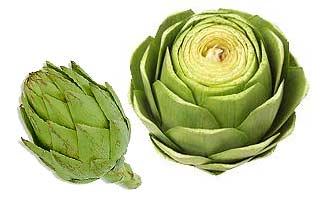 Alcachofa (Cynara scolymus)