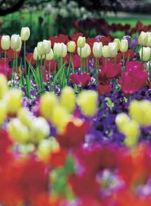La atención básica de las flores plantadas