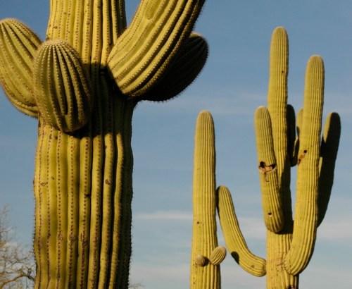 El cactus más grande del mundo