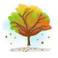 Tiempo de plantar la albahaca 4