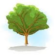 Tiempo de plantar la albahaca 3