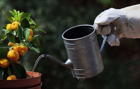 La importancia del riego en las plantas