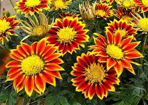 Verano, momento ideal para plantar en el jardín