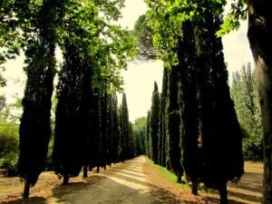 El ciprés: origen mitológico 3