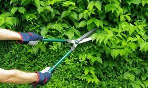 Cuidados de nuestro jardín en octubre 2