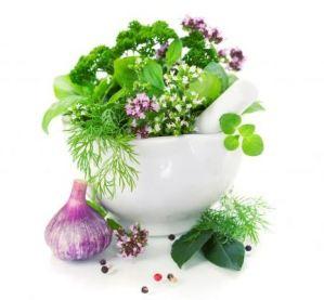 Plantas que curan plantas 3