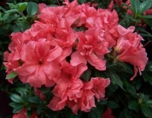 Plantas y flores del mes de diciembre 1