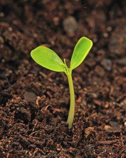 Febrero: Preparando semilleros para nuestro huerto