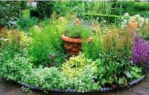 plantas jardin-medicina