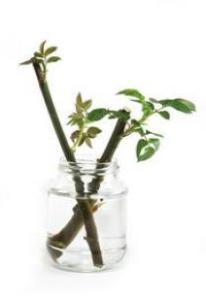 Jardines: tareas de abril 2