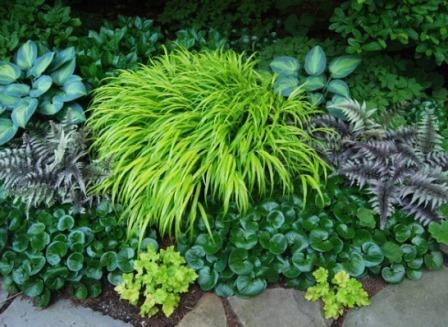Hakonechloa macra o hierba de Japón.