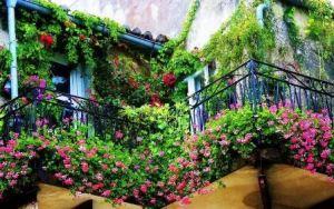 Plantar en balcones 1