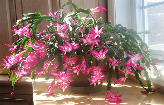 Cómo cuidar plantas en verano