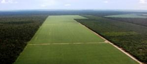 Agricultura Regenerativa I 4
