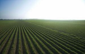 Agricultura Regenerativa I 3