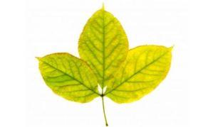 Hojas amarillas: ¿Ha llegado el otoño? 1