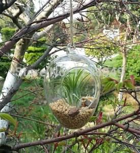Plantas en terrario 4