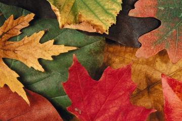 Tareas del jardín en otoño