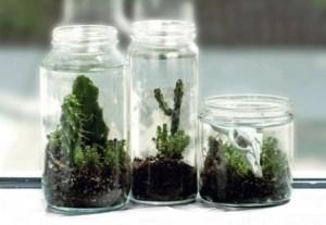 Plantas en terrario 1