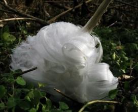 frost-flower-3