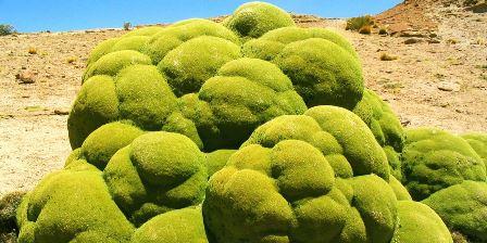 LLareta: rocas verdes