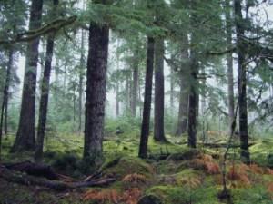 outdoorhub-video-creepy-video-of-forest-floor-breathing-2015-11-11_15-27-27-800x600