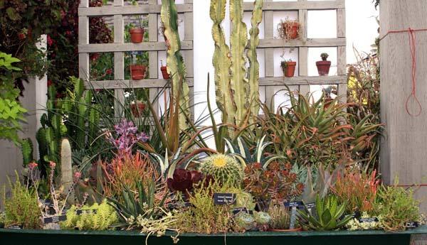 comprar-plantas