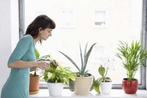 cuidado-de-plantas-506dx