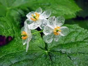 curiosidades-sobre-plantas-y-flores