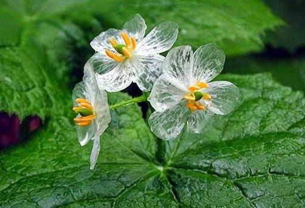 Curiosidades sobre plantas y flores