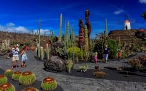 CT-Cactus-07@2x