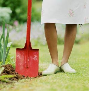 Tareas del jardín en febrero