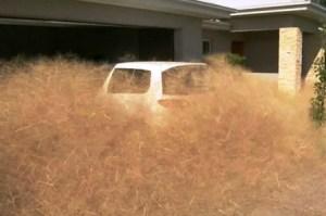El-pánico-peludo-aparece-cada-año-en-Australia-Foto-7News