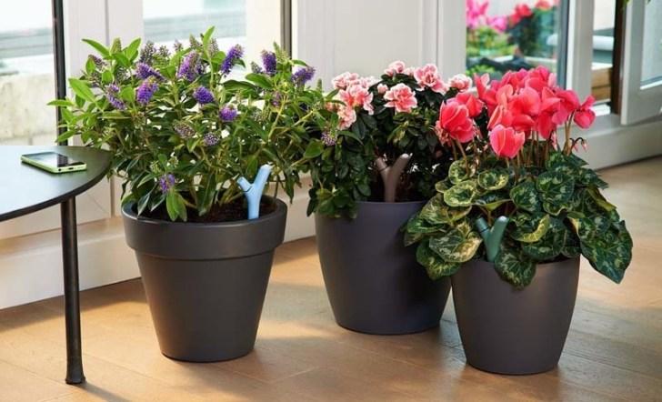 consejos-para-comprar-plantas