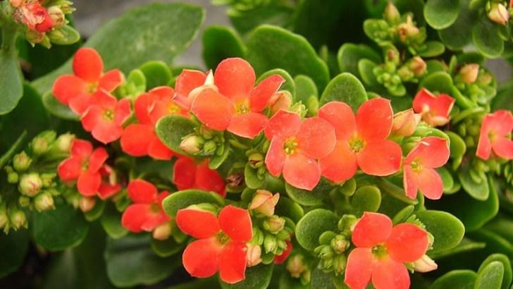 5 plantas decorativas de interior
