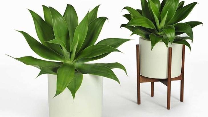 Cuidado de plantas en macetas
